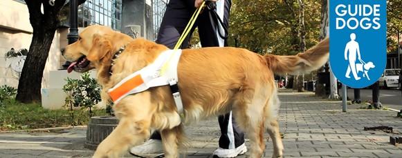 Guide Dogs Uk Volunteer