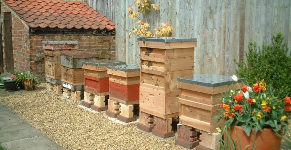 six working bee hives are lined up in a garden on gravel in front a fence sitting between an outbuilding and flower pots.